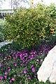 Eleouthkia Traditional and Botanical Park, Cyprus - panoramio (2).jpg