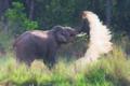 Elephant bath.png