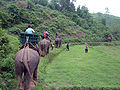 Elephant ride in Chiang Rai Province 2007-05 15.JPG