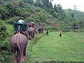 Elephant ride in Chiang Rai Province 2007-05 15.JPG