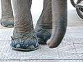 Elephant sandals (3155610040).jpg