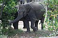 Elephants by the roadside (7568255202).jpg