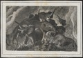 Elephas africanus - 1700-1880 - Print - Iconographia Zoologica - Special Collections University of Amsterdam - UBA01 IZ22000084.tif