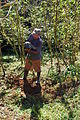 Elieser planting guaba tree in his farm. (5662183776).jpg
