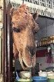 Em - Camelus dromedarius head - 3.jpg