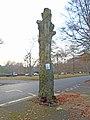 Endangered tree on Menlove Avenue 1.jpg