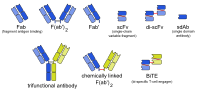 Engineered monoclonal antibodies.svg