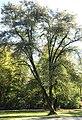 Englischer Garten Herbst-17.jpg