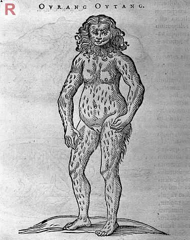 "Engraving of an Orangutan by Willem Piso, late 17th C. (Wikimedia Commons) Early depictions of primates may have influenced Rousseau's conception of ""natural man."""