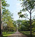 Entrée du jardin du père Gillet à Kisantu, Bas-Congo.JPG