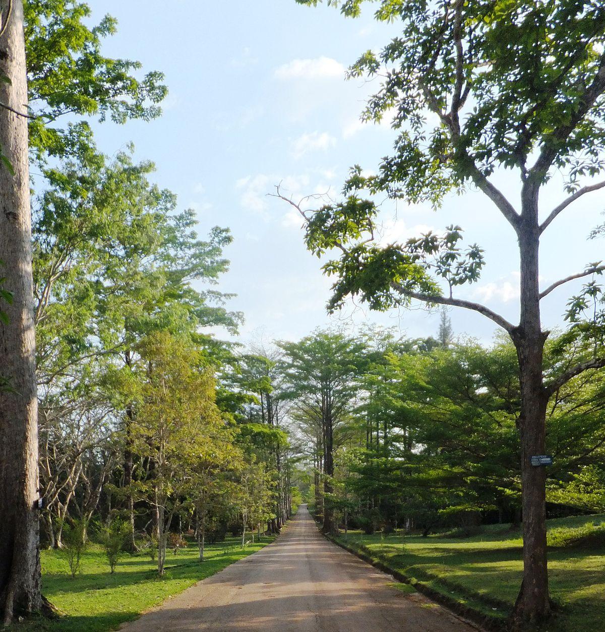 Jardin botanique de kisantu wikip dia for Jardin botanique de conception