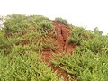 Erramatti Dibbalu (Red Sand Hills) in Visakhapatnam 02.JPG