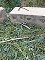 Ethiopie-Exploitation de l'eucalyptus (3).jpg