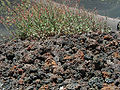 Etna igneous rock.jpg
