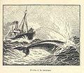 FMIB 33262 Peche a la Baleine.jpeg