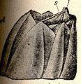 FMIB 52656 Balanus A, external view; s, Scutum; t, tergum.jpeg