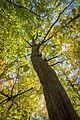 Fall colours (29675236513).jpg
