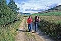 Farm road to Glack - geograph.org.uk - 378760.jpg
