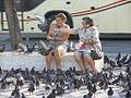 Feeding Pigeons (5963366183).jpg