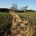Fence and trees near Humber - geograph.org.uk - 676230.jpg