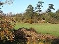 Field and trees near Witnesham - geograph.org.uk - 607669.jpg