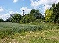 Field by Church Lane - geograph.org.uk - 1358252.jpg
