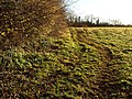 Field by Nut Bush Lane - geograph.org.uk - 1079960.jpg