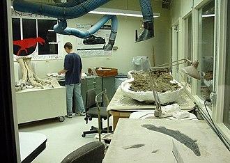 Sue (dinosaur) - Field Museum Fossil Preparation Lab