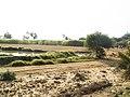 Fields near muhallah Rano Kolhi, Syed Matto Shah - panoramio.jpg
