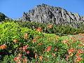 Flickr - brewbooks - Red Columbine - Descending from Marmot Pass.jpg