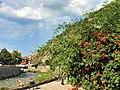Flora në qytetin e Prizrenit.jpg