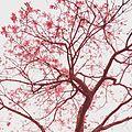 Flores - Parque Cemucam.JPG
