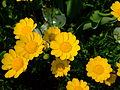 Flower-center135642.jpg