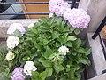 Flower20180527 184618.jpg