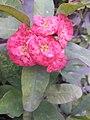 Flower20180527 184927.jpg