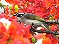 Flower Lover (14291379881).jpg