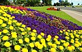 Flower beds at Whiteabbey - geograph.org.uk - 891161.jpg