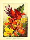 Flower grower's guide (1898) (14783753455).jpg