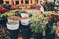 Flower market buckets (Unsplash).jpg