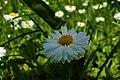 Flower of hope after pandemic.jpg