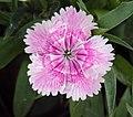 Flowers - Uncategorised Garden plants 294.JPG