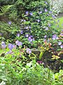 Flowers in Cashel (6047944214).jpg