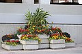 Flowers in Oshawa IMG 2116 (28735384617).jpg