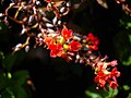 Flowers of Iran گلهای ایران 18.jpg