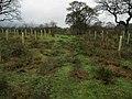 Following a Track towards Clough Bottom - geograph.org.uk - 1671859.jpg