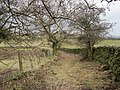 Footpath following an Old Green Lane near Henshaw - geograph.org.uk - 1774562.jpg