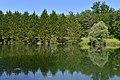 Forêt de sapins au second étang (29652631433).jpg