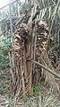 Forêt galerie de Twometa 07.jpg
