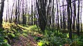 Forest Faries - panoramio.jpg
