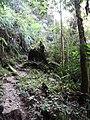Forest Scene - Tanah Rata - Cameron Highlands - Malaysia - 01 (35375134822).jpg
